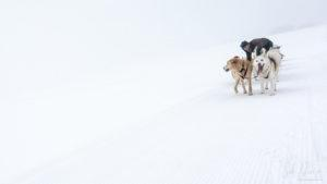 Photographier neige minimaliste
